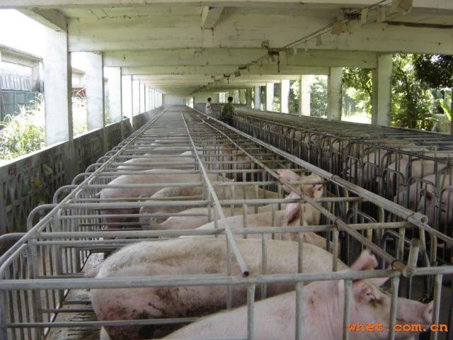 野养猪场设计图展示